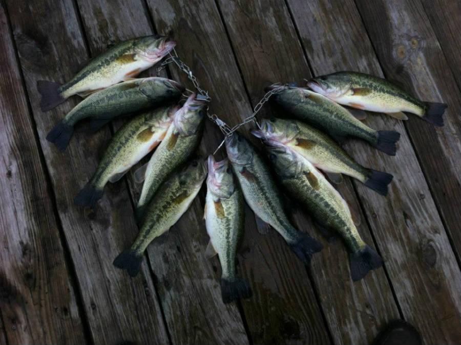 Fishing_Stringer_3_900.jpg