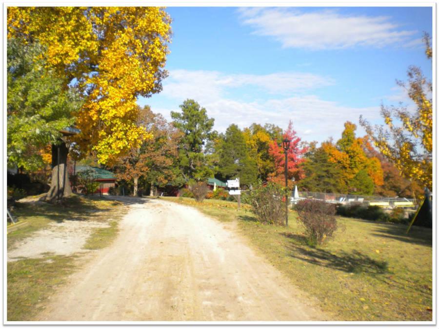 Main_Road_Fall_3_900.jpg