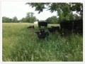 Cows_Babies_1_900.jpg