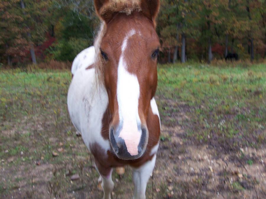 Horse_Dakota_900.jpg
