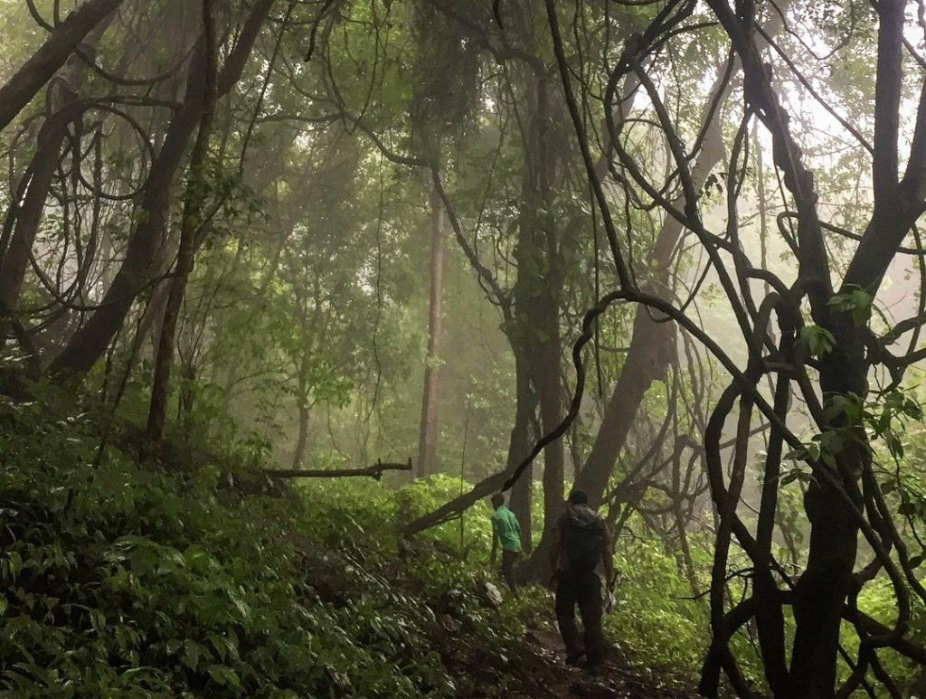 Misty forest during monsoon.