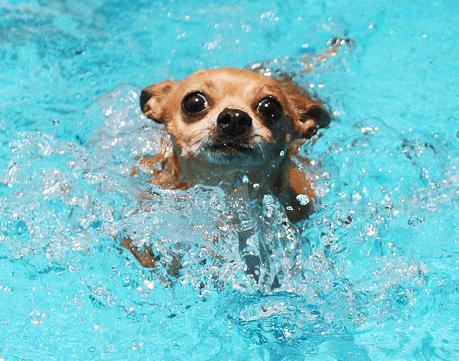 doggy paddle