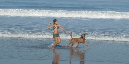 JetSetPets- Luxury Pet Travel