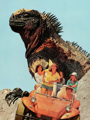 Iguana Beach Weekend