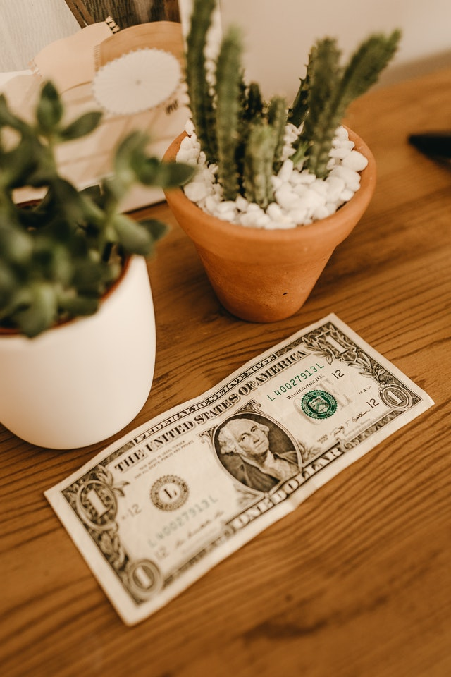 US dollar bill on a table with cactus plant in the background