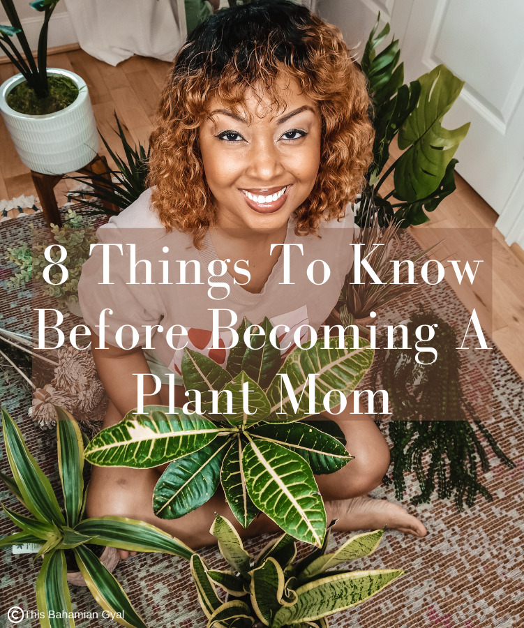 8 Important Things To Know Before Becoming A Plant Mom