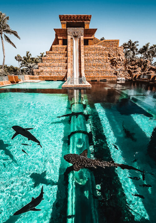 Photo of a steep Mayan waterslide that goes into shark-filled waters