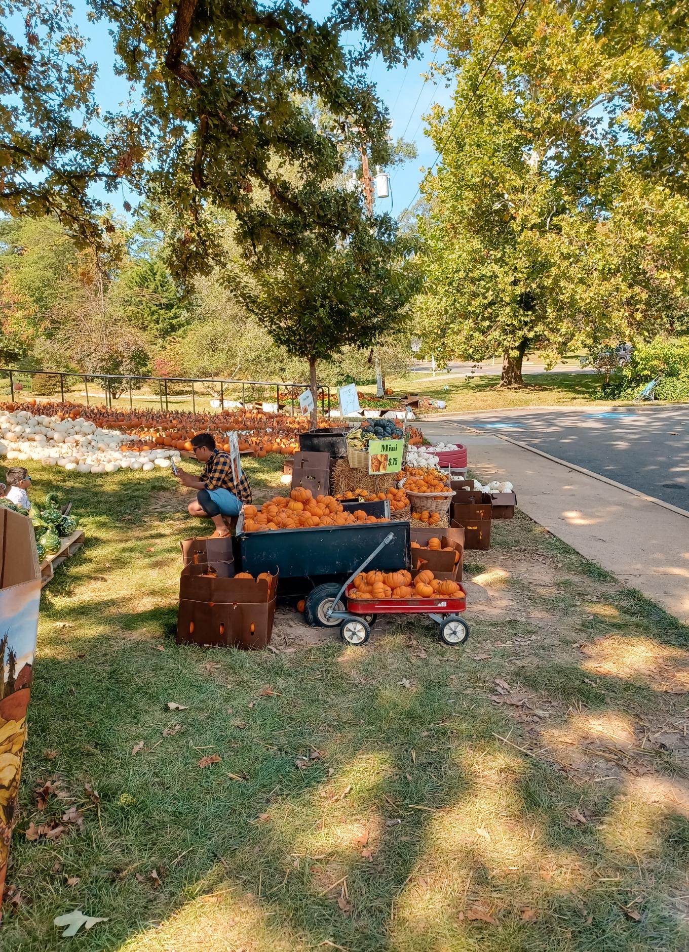 a wagon full of pumpkins in Alexandria, Virginia