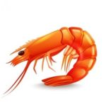 live shrimp for sale at Scallop Cove Bait and Tackle