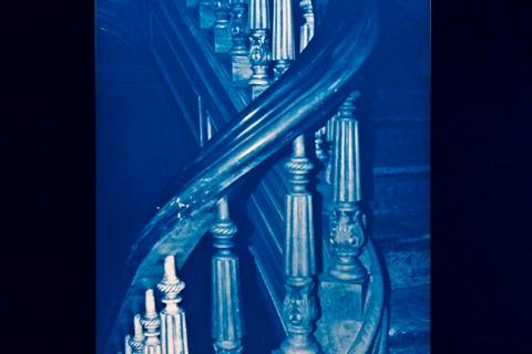 cyanotype-14