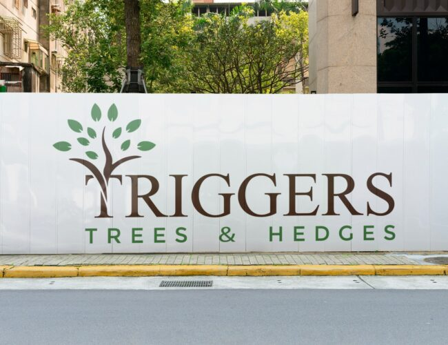 Triggers Trees and Hedges Logo Design | DB IT New Zealand