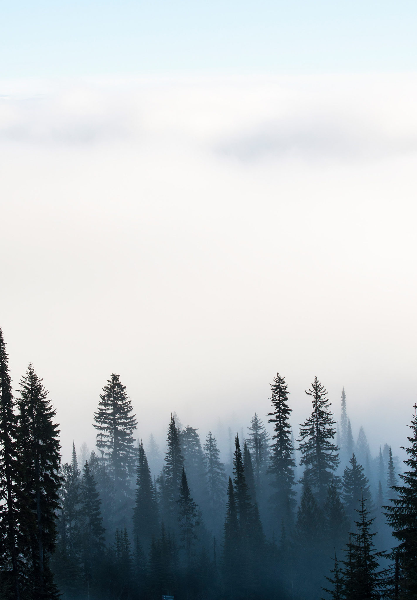 Blue Fog Trees