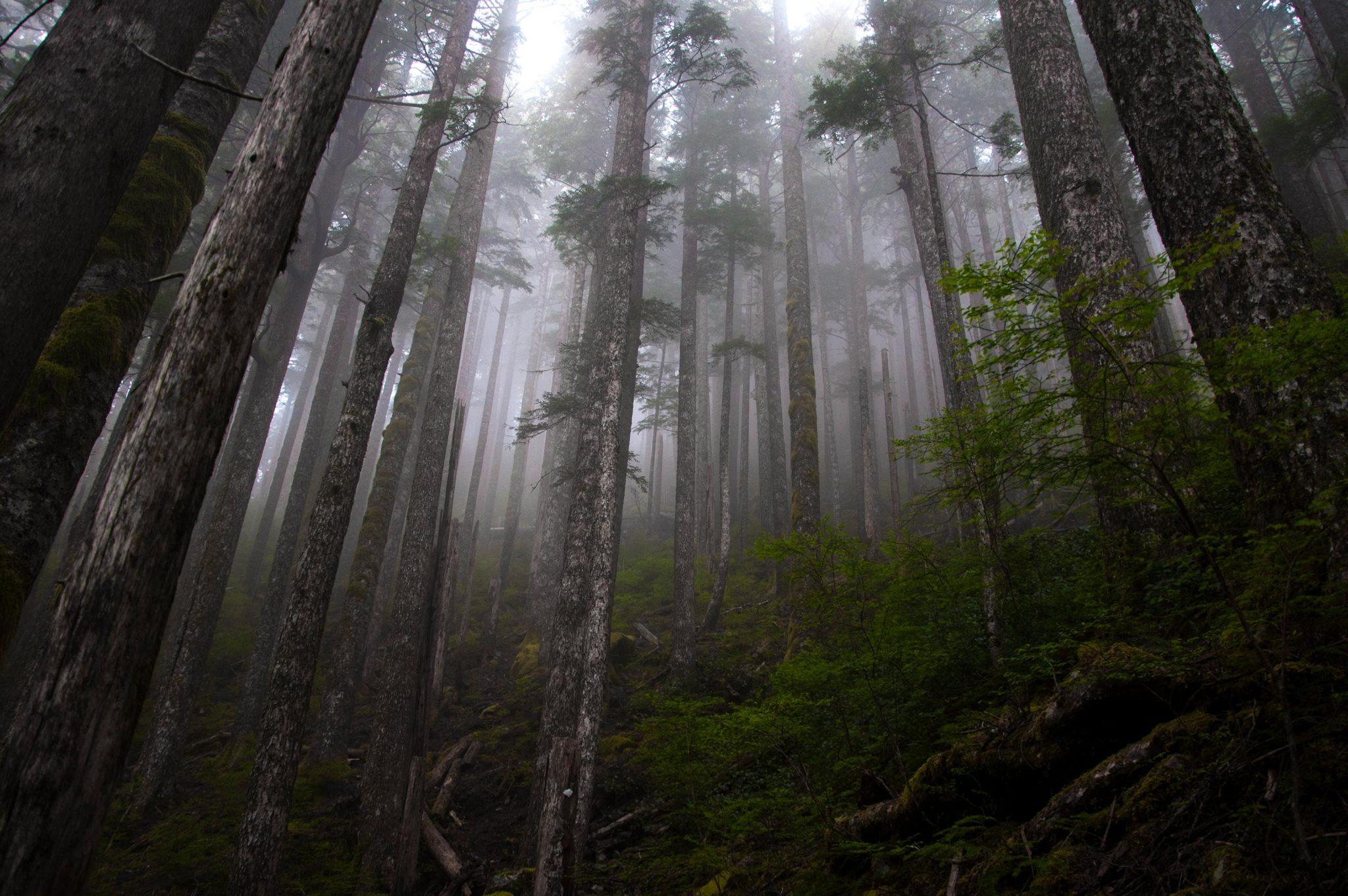Lone Cone Foggy Forest
