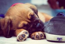 What to do before bringing a puppy home