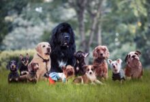 Best Dog Breed Selector Quiz