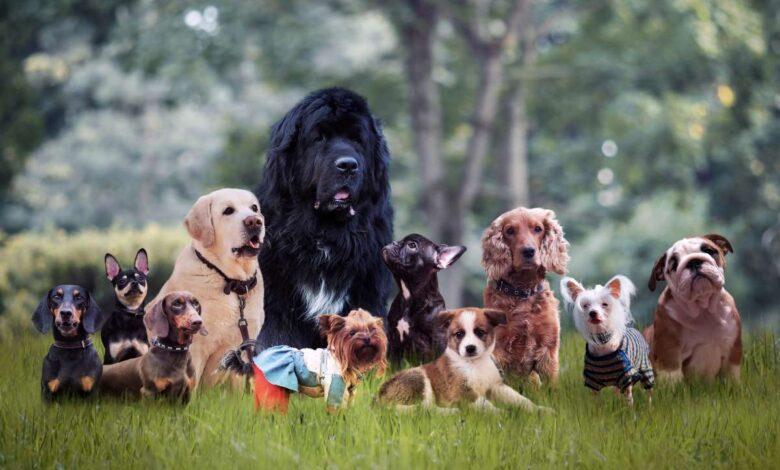 Best Dog Breed Selector Quiz