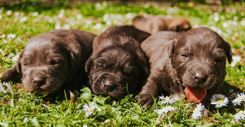 New Puppy Guide