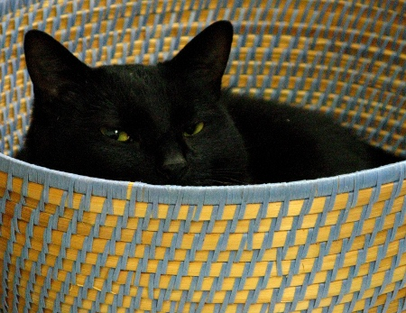 kittyforweb