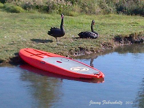 swans-JimmyFahrenholtz-2013dec10