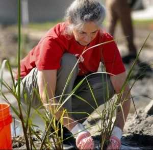 bayou-planting-courtesy-advocate