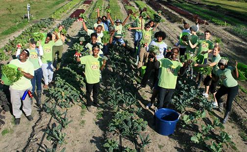 grow-dat-harvest-pic