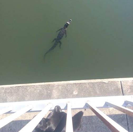 Olivia Greene captured this photo while walking her dog over the Esplanade Bridge.
