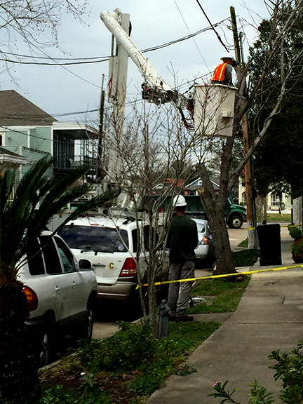City takes action on dead tree at 3309 Grand Route Saint John.  February 15, 2016