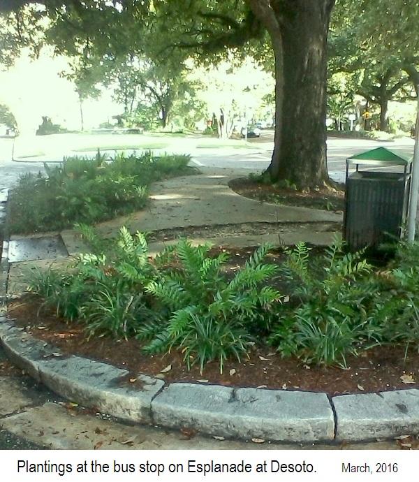 busstopcreteesplanade-plantings