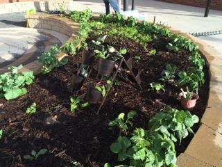 By week 8, the garden is flourishing!