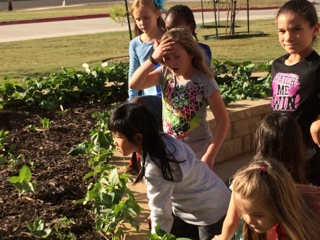Week 8. At the beginning of each garden lesson the students get to examine the new growth. They make observations and ask questions.
