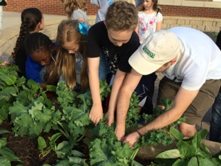 Week 8. Students are eager to pick large kale leaves
