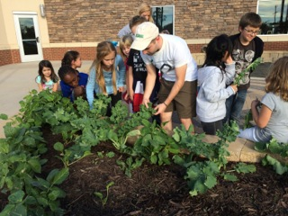 Week 8. Students are taught the technique of harvesting leaves off of the kale plant.