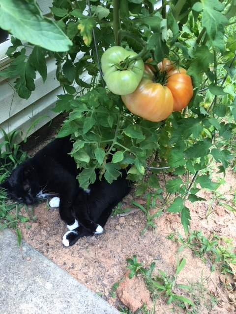 Cats and Vegetables