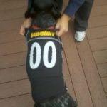 Steeler Dog