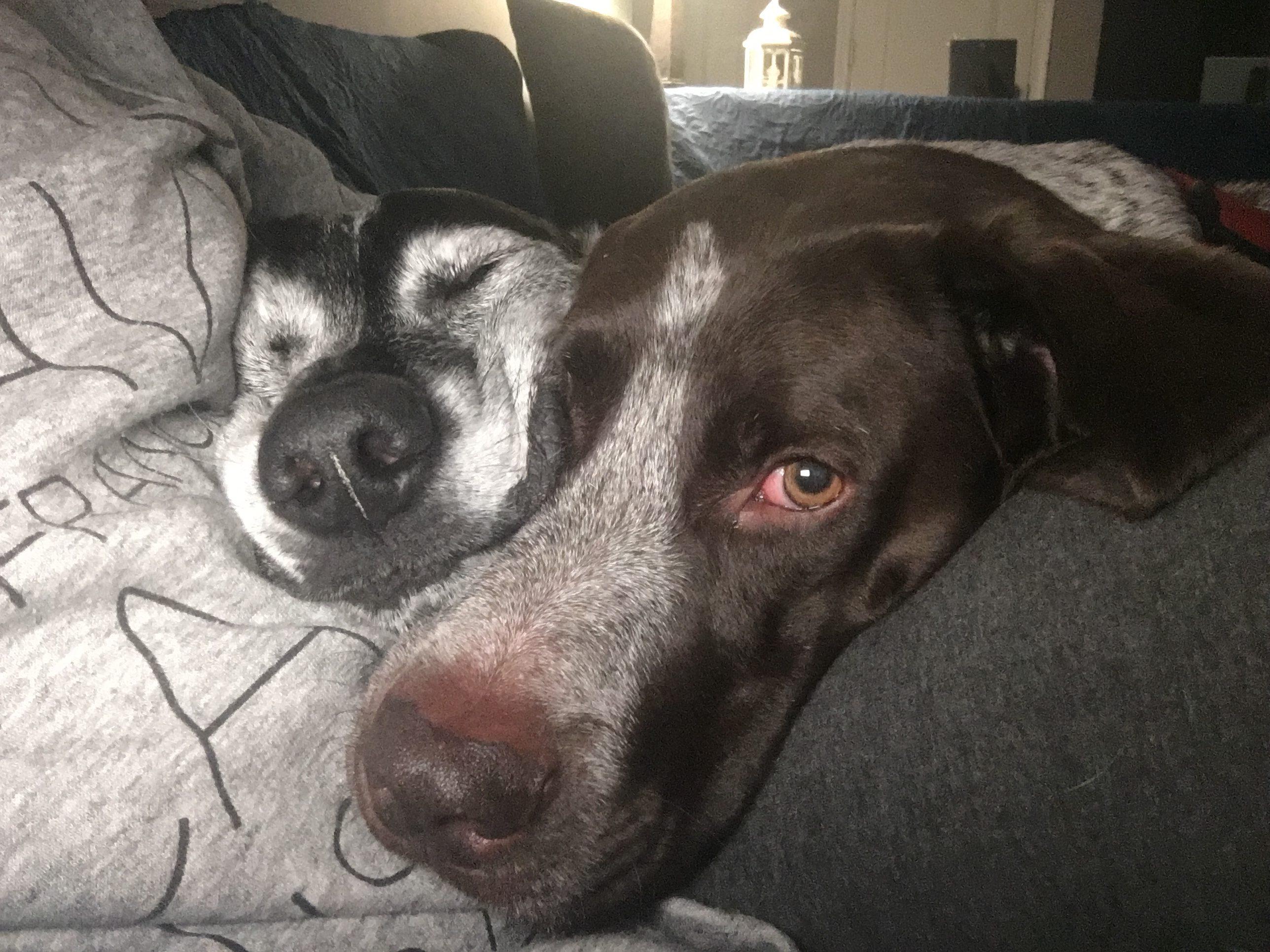 sleepy doga