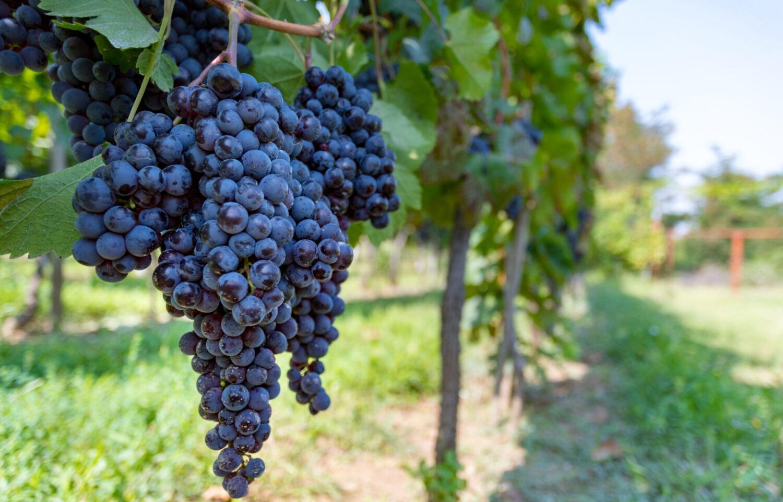 Celebrate Wine!