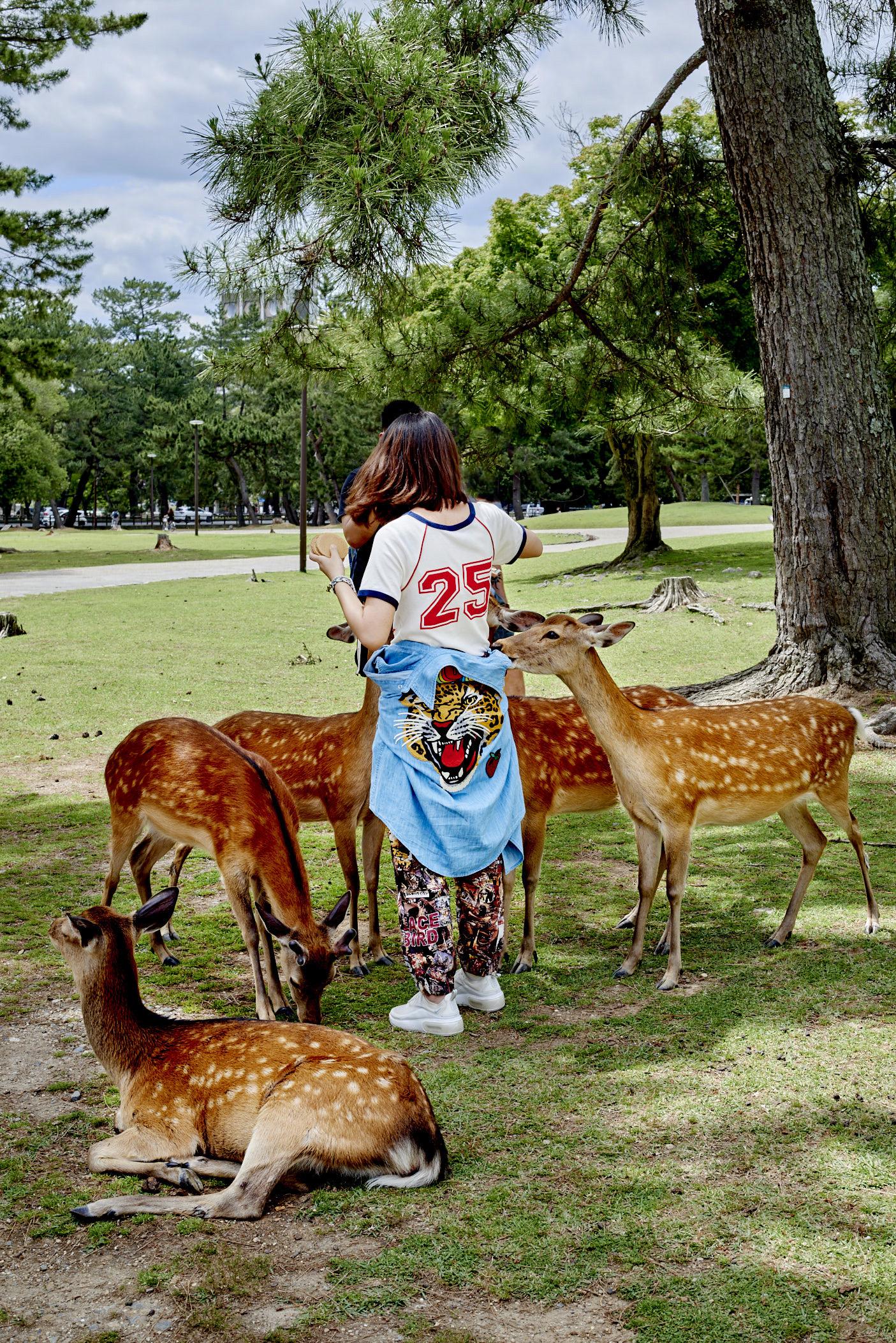 Yasara Gunawardena – Japan – Nara – Deer Park