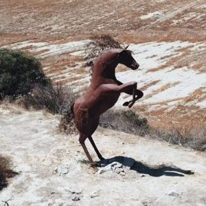 Horse on Two Legs