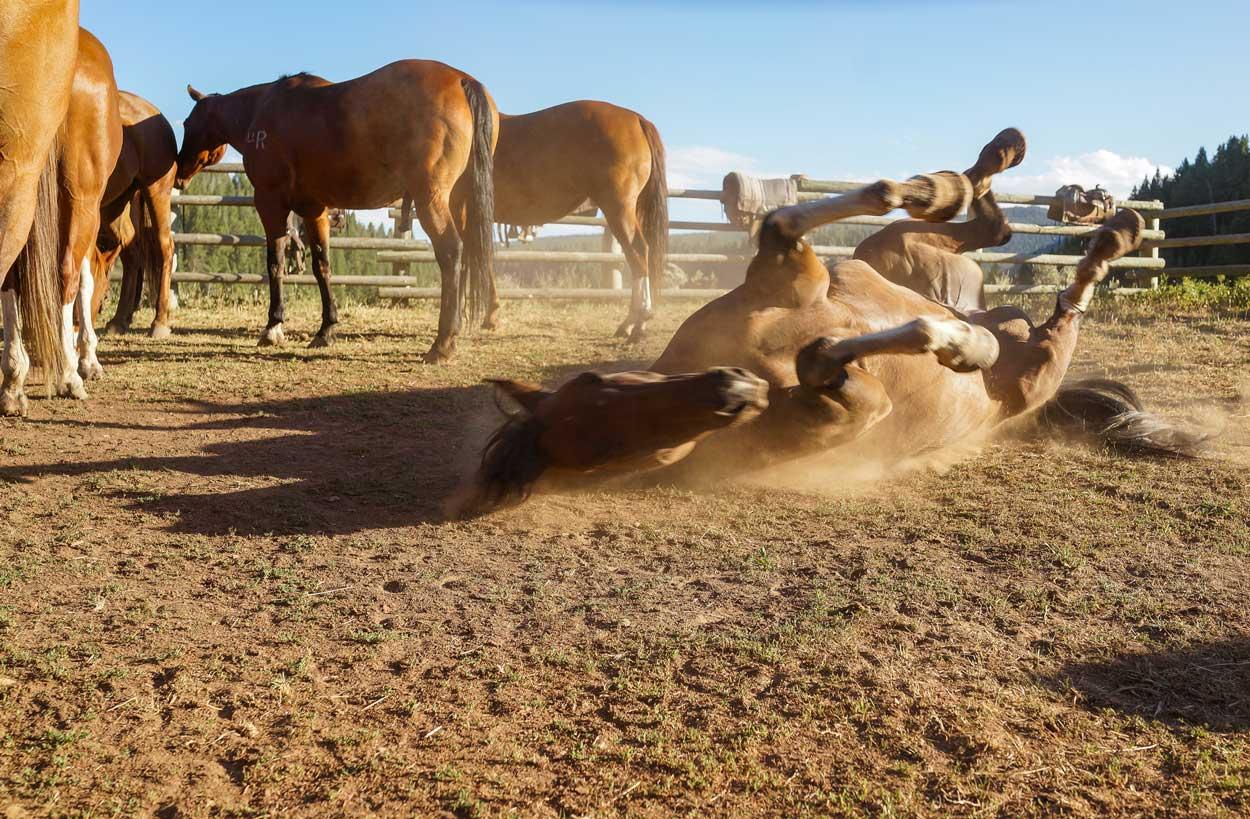 best-dude-ranch-buffalo-wy