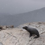 Snapshot of the Week: Seals at the End of the World