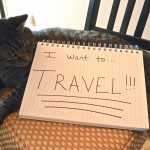 Why Travel Local