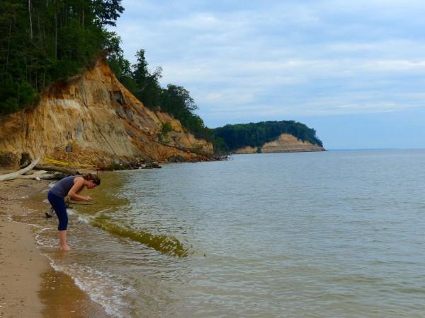 Calvert Cliffs- fossil hunting