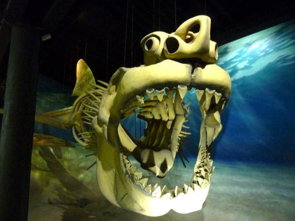 Calvert Marine Museum- shark