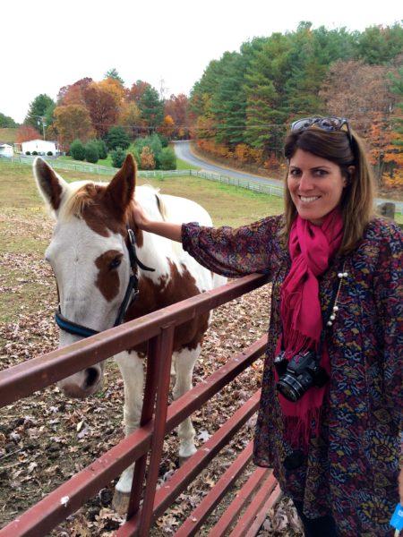 Petting horses
