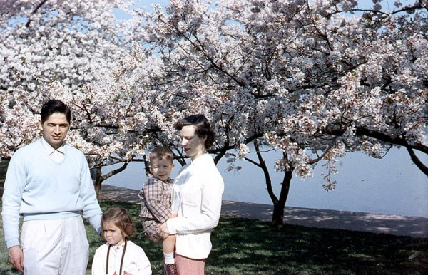 Cherry Blossoms in DC- mom as a child