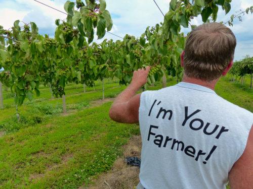 Frederick agritourism- Robert Black checks on a kiwi berry crop at Catoctin Mountain Orchard
