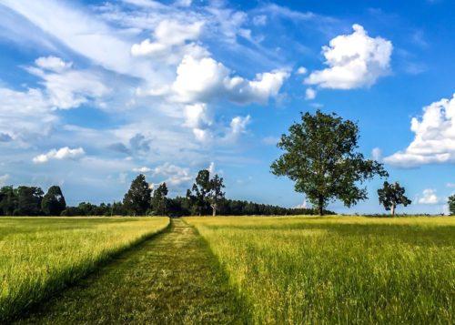 DC Day Trip to Manassas- Manassas Battlefield trail