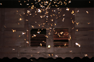 A gathering of termites on the bottom of a wall