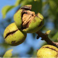 TerraSoul Organic Raw Walnuts