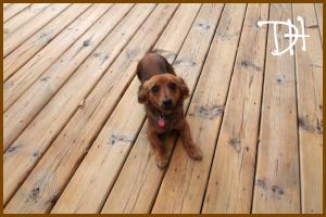 Doogie on Deck